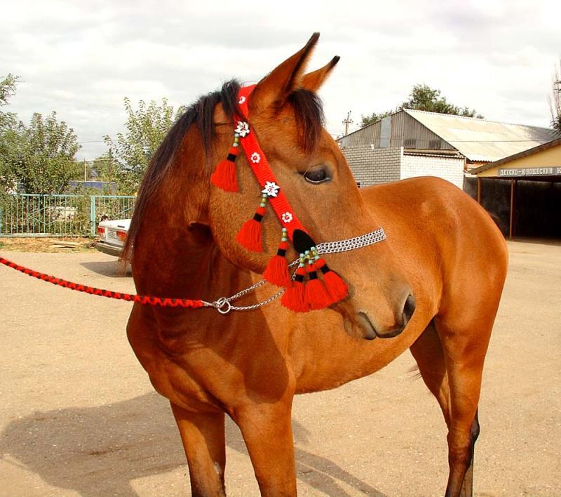 Налобники для лошадей своими руками 410
